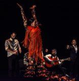 Francisco Hidalgo Takes Flamenco Back to a Nobler Time