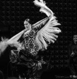 Siempre Flamenco's Festival de Cante Celebrates 10th Year